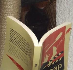 Katze liest Soap